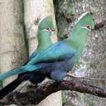 Birding Routes